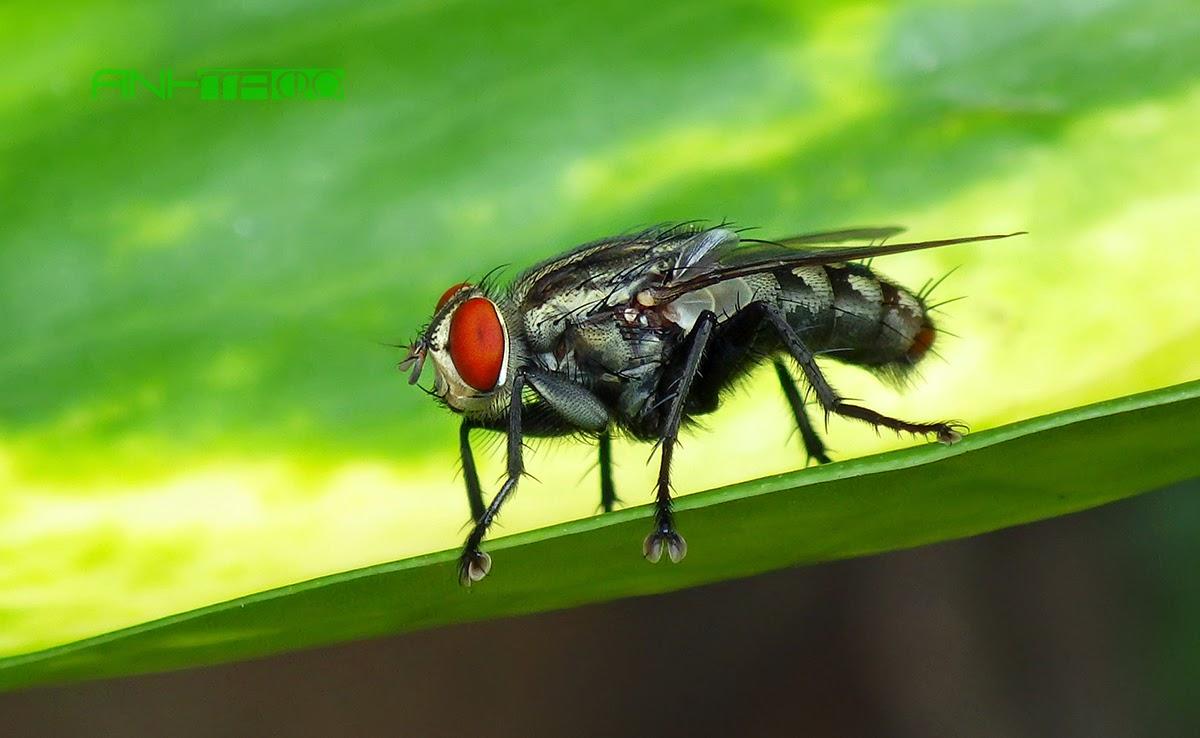 cách đuổi côn trùng mà không độc hại