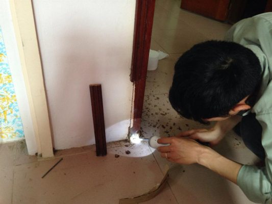 Xử lý diệt mối tại Nam Định