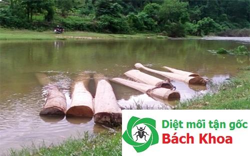 cách diệt mối tận gốc tăng tuổi thọ gỗ