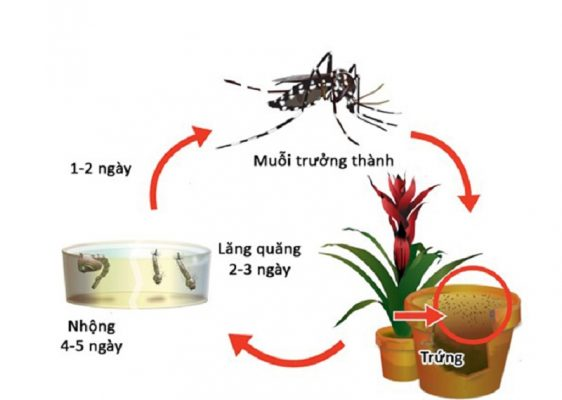 Thuốc diệt lăng quăng bọ gậy Abate 1SG